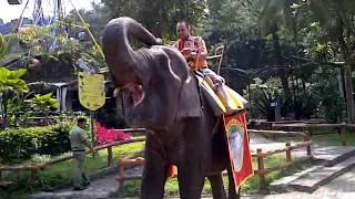 download lagu Noah's Elephant Ride At Taman Safari Cisarua Bogor Indonesia gratis