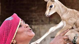 Indian tribeswomen that breastfeed deer alongside children