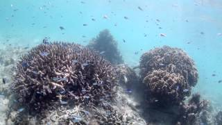 沖縄 シュノーケリング 大度海岸 Point K snorkeling underwater video odo beach at Okinawa island