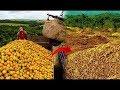 Ormana 12.000 Ton Portakal Kabuğu Attılar, 20 Yıl Sonra Bakın Nasıl Değişti