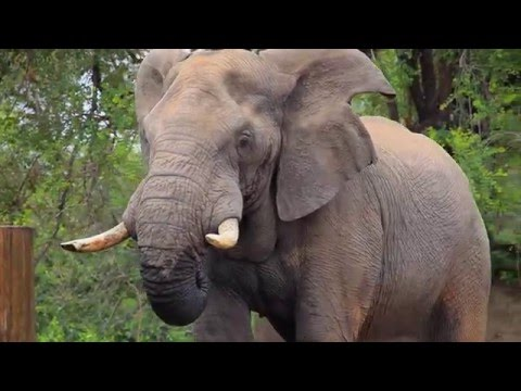 Walking Safari in Africa - intense close encounters with wildlife