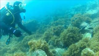Scuba Diving at Two Harbors - Catalina Island