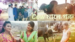 New Bangla Eid-Ul-Adha Natok || Cow Mane Goru