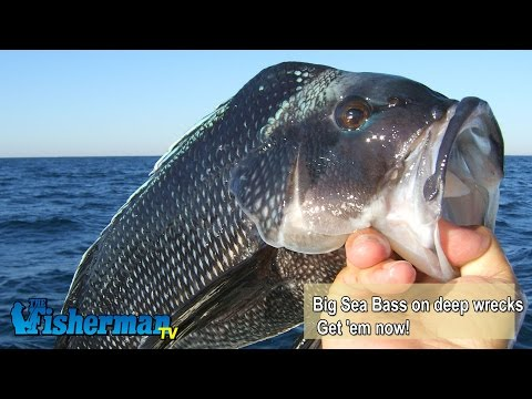 December 8, 2014 New Jersey/Delaware Bay Fishing Report with Chris Lido