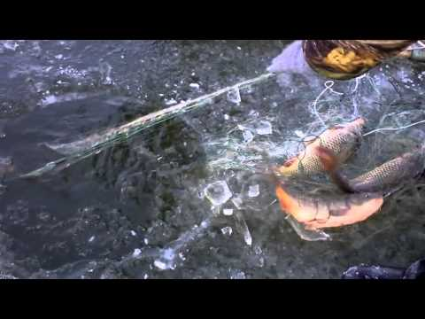 видео ловля карпа сетью видео