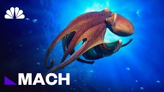 Is The Octopus An Alien? | Mach | NBC News