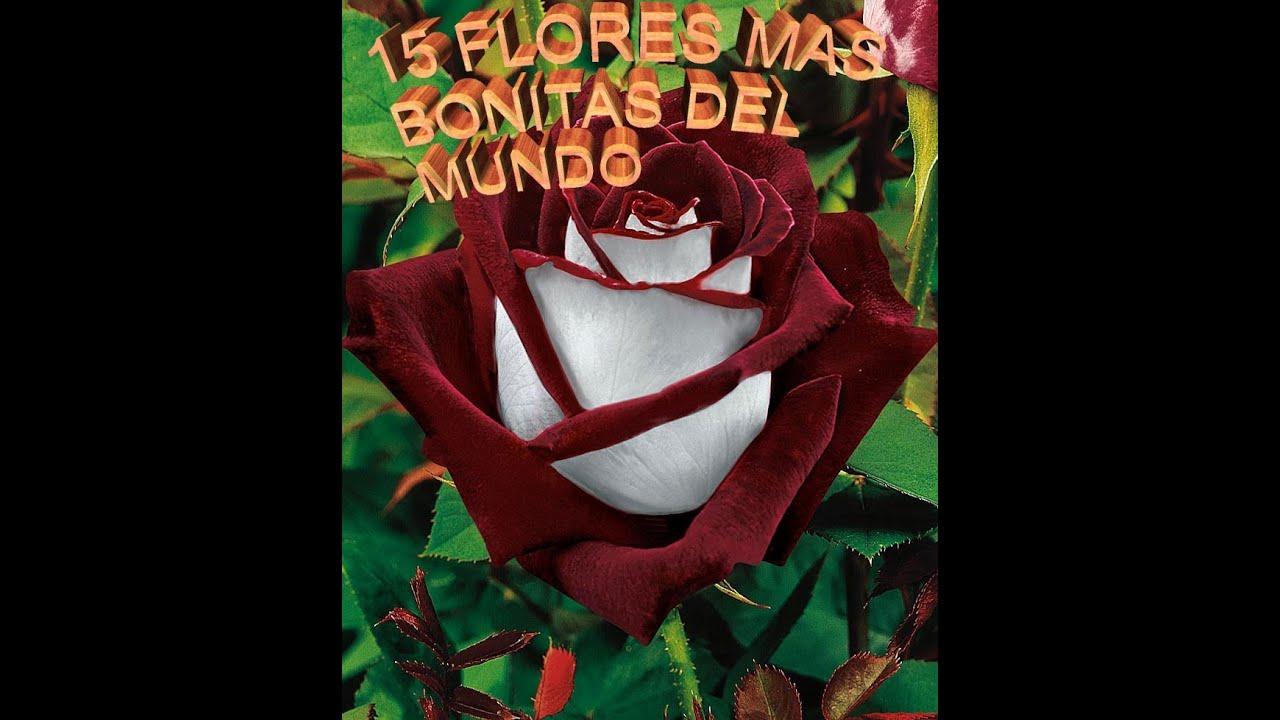 Las flores mas bonitas del mundo youtube - Fotos de flores bonitas ...