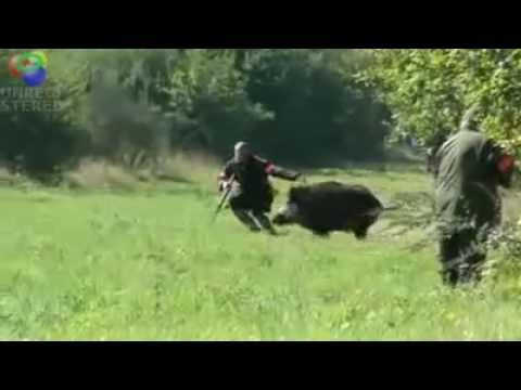 Up close wild boar hunt Attack of pigs! Hunter himself defense!!! Video