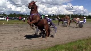 Horse accident 2 - Kauhajoen raveissa sattuu ja tapahtuu 2 10.07.2016