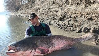 CATFISH BIG MOSTER AMAZING FIGHT - HD by CATFISHING WORLD