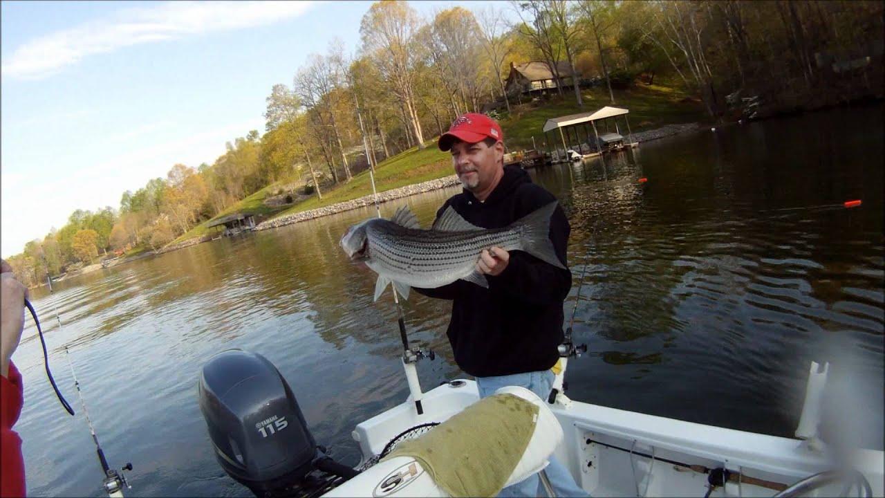 Smith mountain lake stripers youtube for Smith mountain lake striper fishing