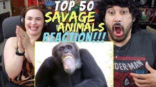TOP 50 Savage Animals! 🐾 - REACTION!!!