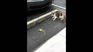 Cat eating A lizard HD