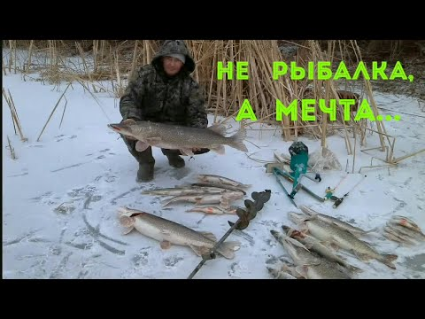 видео ловля щуки на жерлицы по перволедью видео