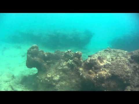 Coral reef Barbados