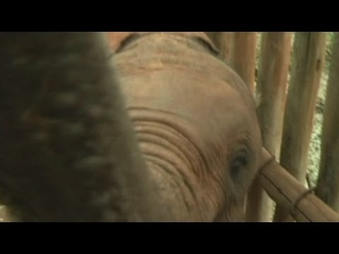 Orphaned baby elephants find a new home in Kenya