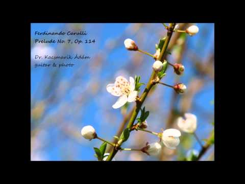 Фердинандо Карулли - Opus 114 No 7 Prelude
