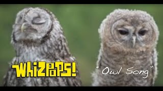 The Owl Song by The Whizpops!