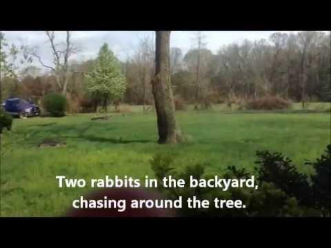 Amazing Rabbit Aerial Backflip