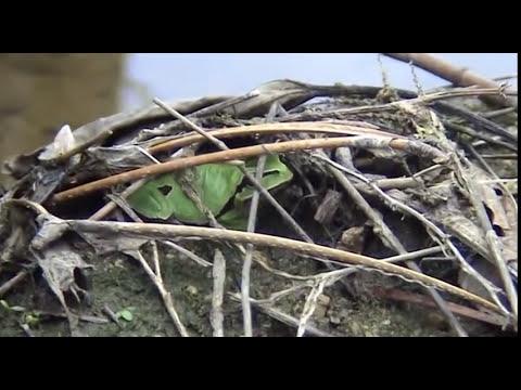 Anfibios (documental divulgativo)