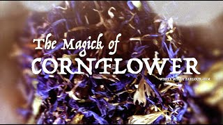 The Magick of Cornflower ~ The White Witch Parlour