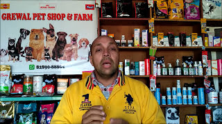 Pet Care - New Born Puppies under 40 days age - Bhola Shola