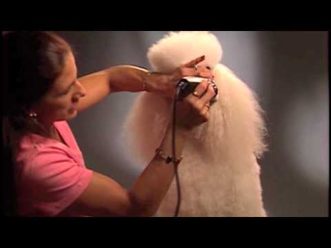 How To Trim your Poodle