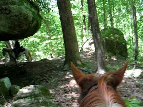 Horseback riding Shawnee National Forest