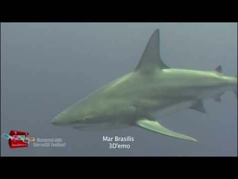 Demo Mar Brasilis 3D   Tiger Sharks