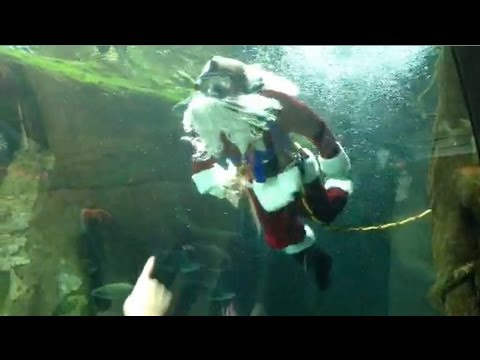 Scuba Santa | California Academy of Sciences