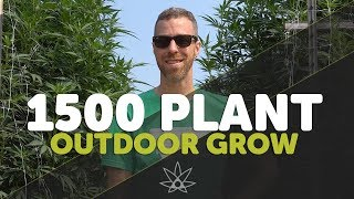 Gary Tours 1,500 Plant Outdoor Weed Farm - Leap Farms // 420