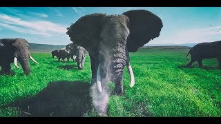 Surrounded by Wild Elephants in 4k 360
