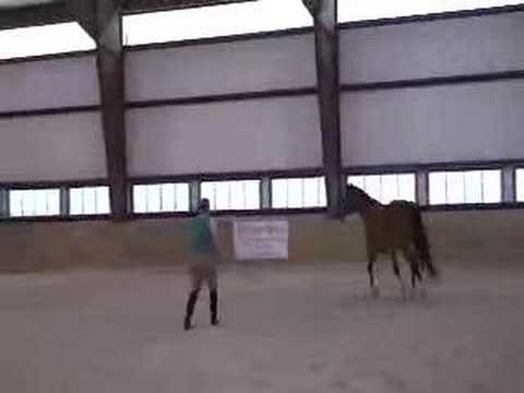 Lorena, 7yr old Rhinelander Mare-For Sale Video