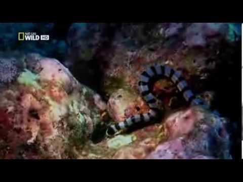 Морской Крайд против Черной Мамбы