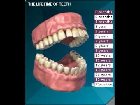 The Lifetime of Teeth in 3D