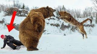 Wild Animals That SAVED Human Lives!