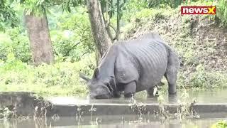 Tapas Sengupta Reports on Kaziranga National Park in Assam animals Marooned