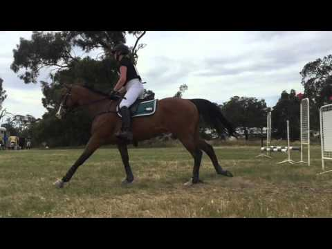Chilean express - Kyneton horse trials 2015
