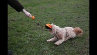 Testbericht: Dog Football Launcher Katapult von NERF