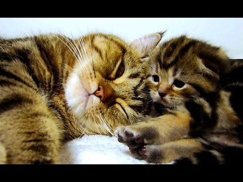Mom Cat talking to her Kittens. 20 min BONUS video