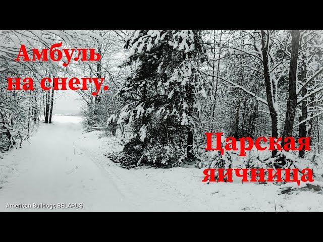 Амбуль на снегу/Старый немецкий прицеп/Царская яичница/Наши щенки