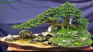 Bonsai sưu tầm 71 - Những tiểu cảnh bonsai sưu tầm đẹp p2.