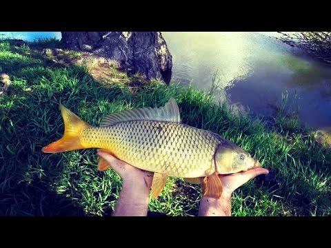 Когда на рыбалке улыбнулась удача. Сазан (речной карп).