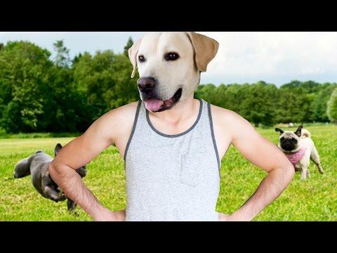 Si yo fuera un perro...   What Dog - JuegaGerman