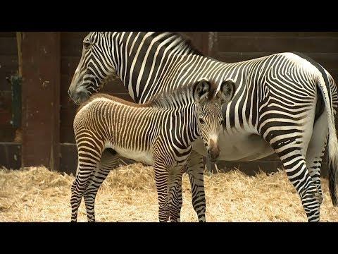 Der kleine Zebra-Patient