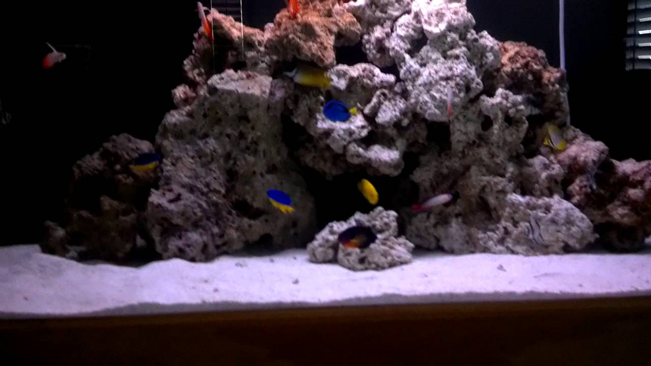 Saltwater live rock tank fish only youtube for Fish only saltwater tank
