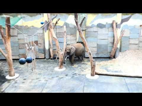 Elefanten Baby Kibali Tiergarten Zoo Schönbrunn * 13. 7. 2019 Loxodonta africana. Lumix fz82 neu