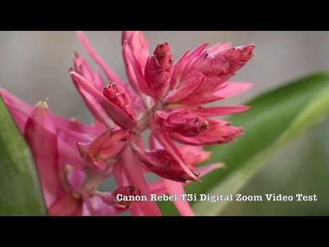 Canon EOS Rebel T3i Digital Zoom Video Test