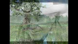 Watch Bobby Bare Tall Oak Tree video