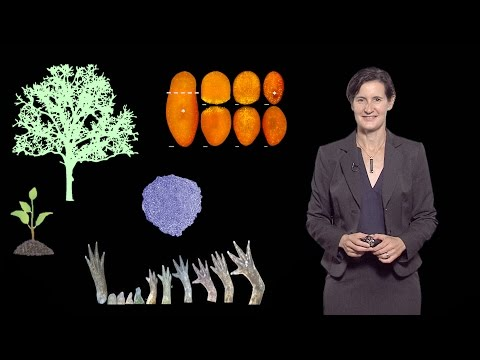 Dominique Bergmann (Stanford U / HHMI) 1: Key issues in plant development